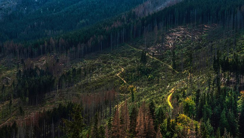 Ecological Economics: A Solution to Deforestation?
